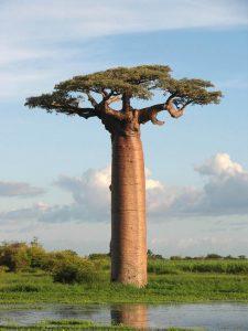 ต้นไม้นำเข้า